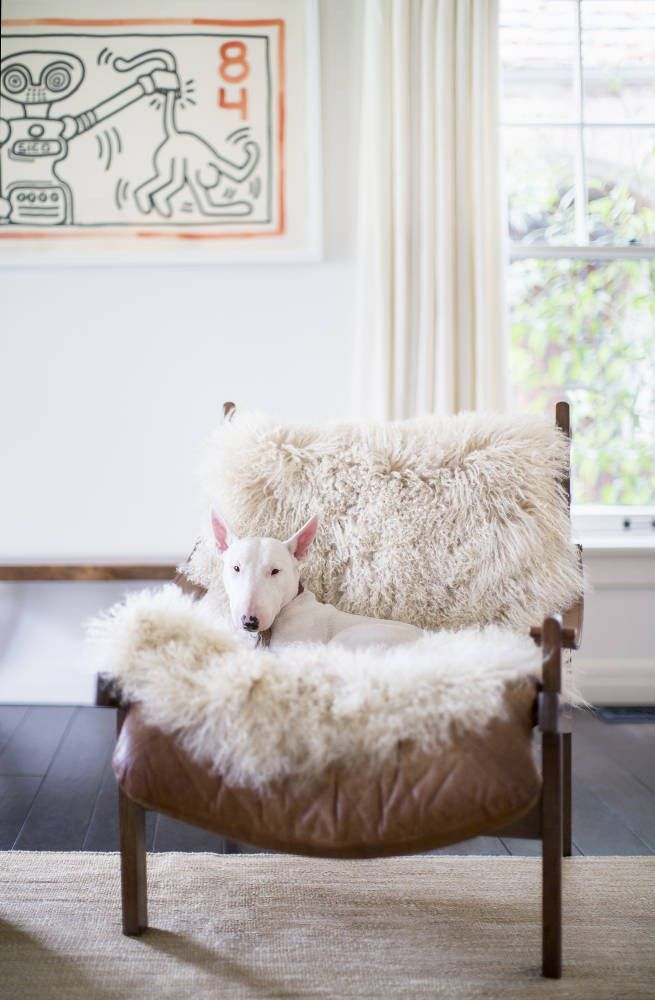 Living room | mini bull terrier relaxing | sheepskin on chair | Click through to see home tour!
