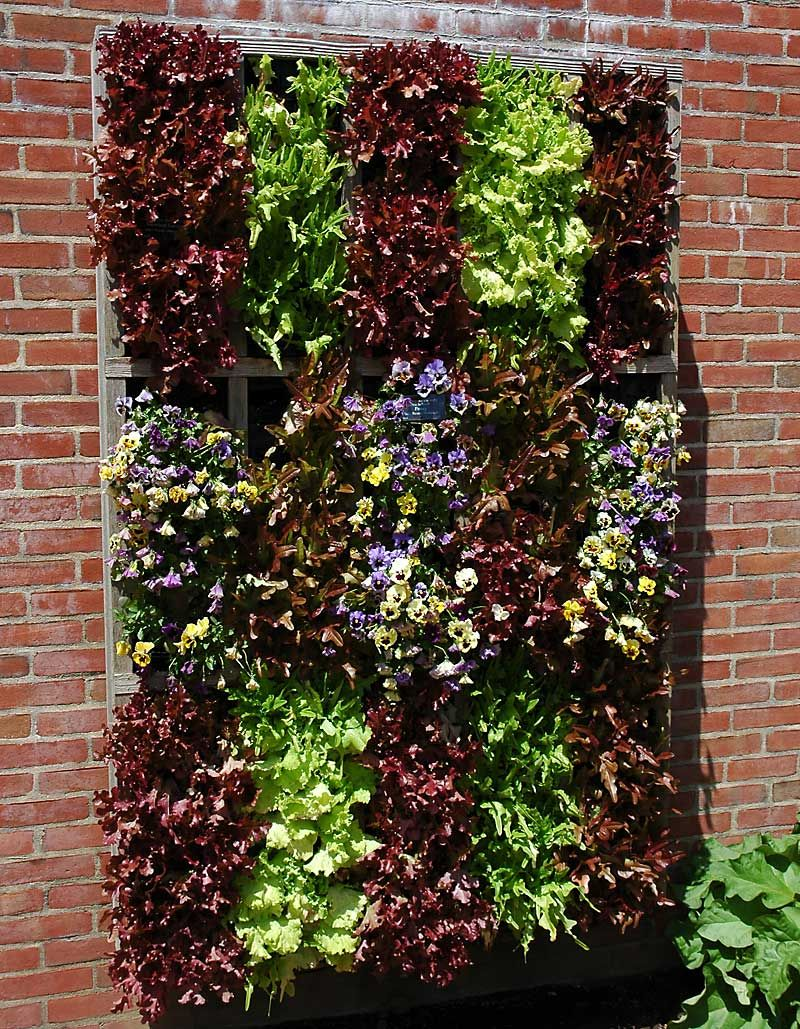 Walled Kitchen Gardens Vertical Lettuce Wow I Wonder How Well This Would Work In Az I