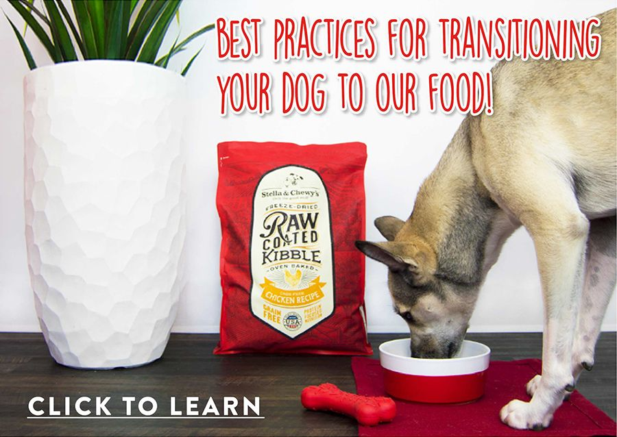 Great dog food still requires a transition learn how to