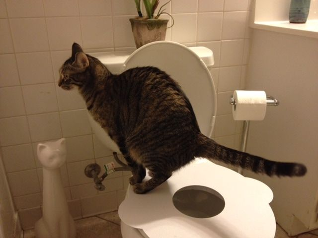 Customer Reviews Of The Purrfect Potty Holding Pen Cat