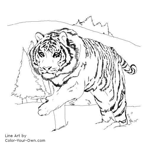 Siberian Tiger Coloring Page Malvorlagen Halloween Geburtstag Malvorlagen Malvorlagen Fur Kinder