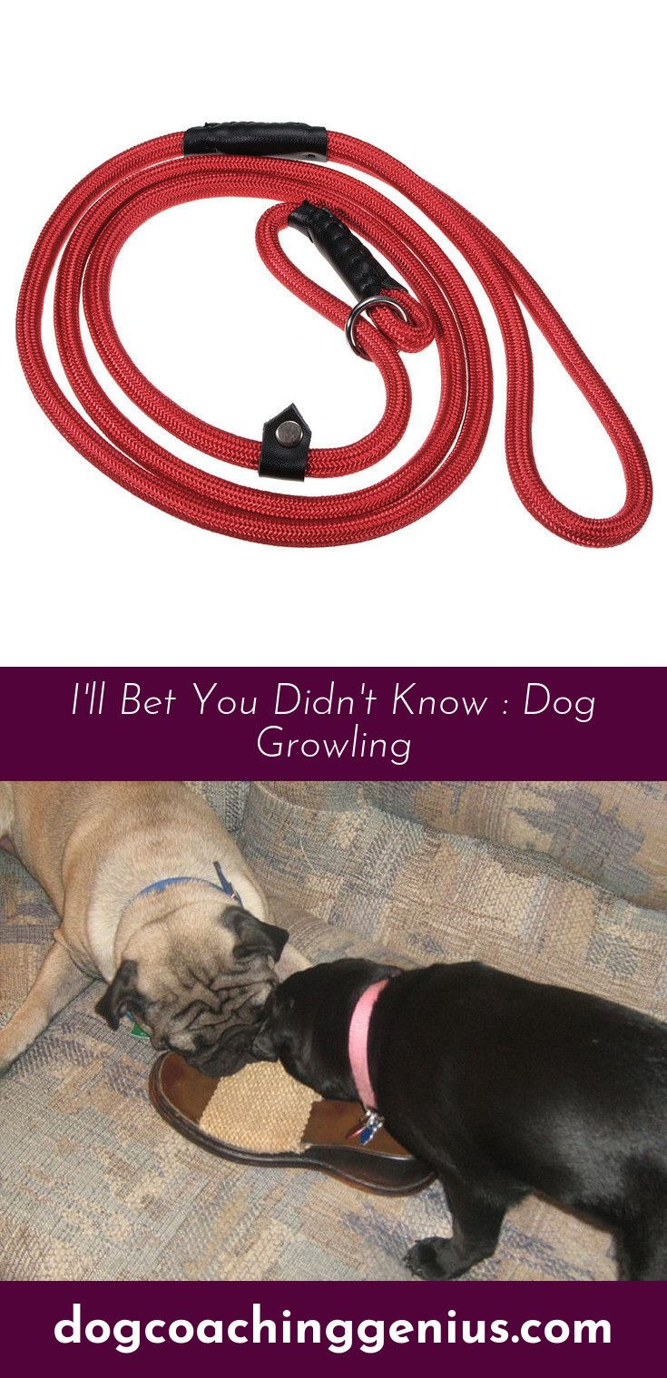 Follow the link for more Stop Dog Biting Dog growling