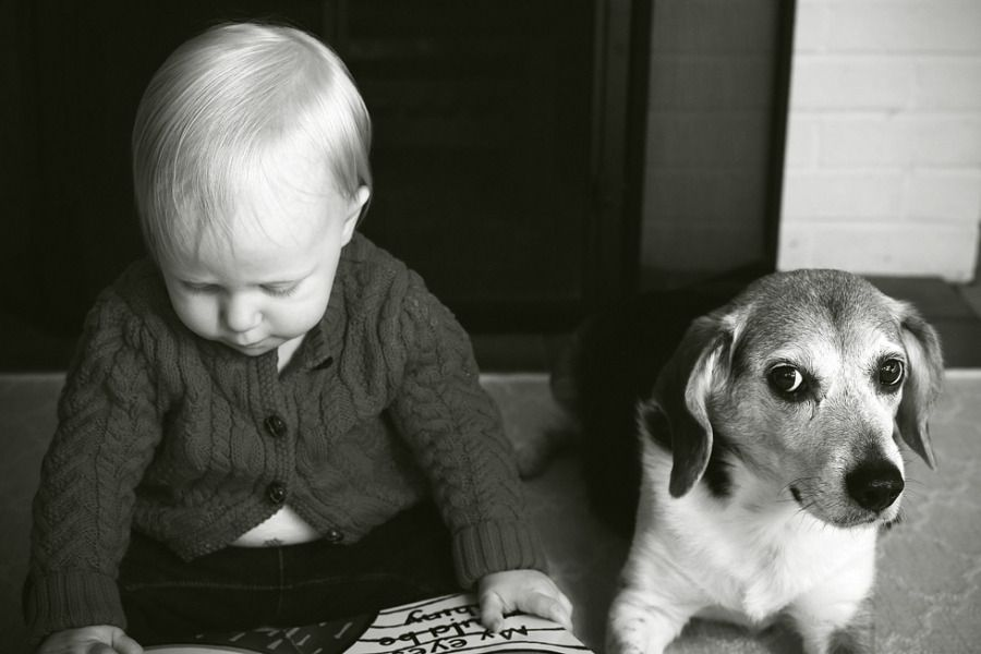Black and white baby reading next to dog photo by Jan Stebbins Photography
