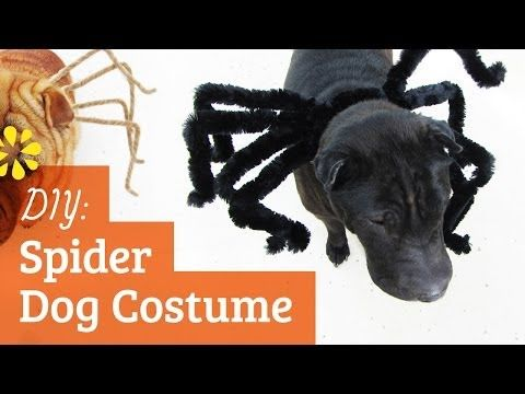 A Cute And Simple Halloween Spider Costume To Make For Your Dog D