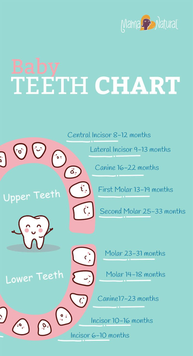 Baby Teeth Chart: What Order Do They Come In | Tooth chart and Teeth
