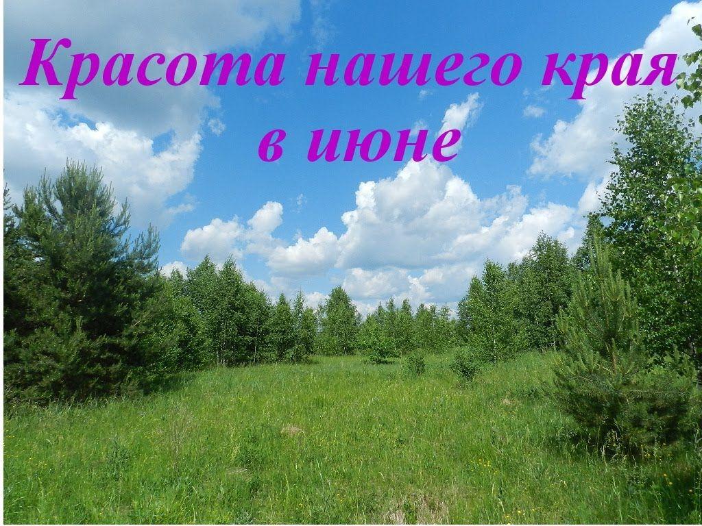 Priroda V Iyune Priroda Srednej Polosy Rossii Foto Iyun 2014