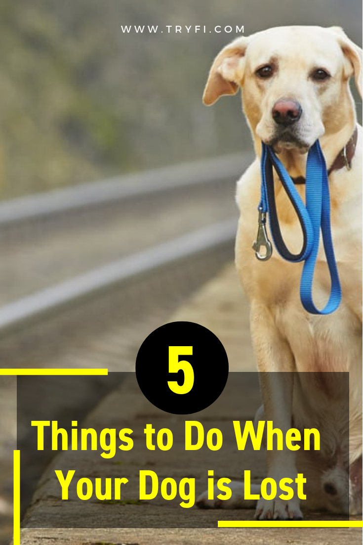 5 Things To Do When Your Dog Is Lost Losing A Dog Losing A Pet Your Dog