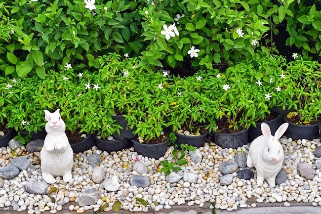 Installation Tips and Top Benefits of Garden Pebbles