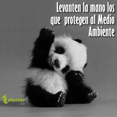 Proteger al Medio Ambiente