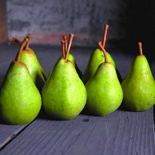 Ayers Pear Tree Ayers Pear Trees Standard Trees Can Reach A