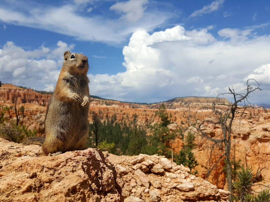 By far my favorite picture from Bryce Canyon UT #hiking #camping #outdoors #nature #travel #backpacking #adventure #marmot #outdoor #mountains #photography