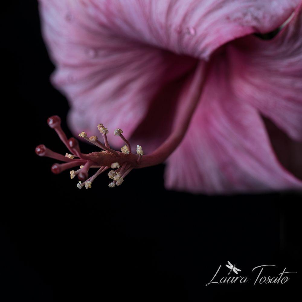#pink Hibiscus #stamen #macro #cold porcelain # flowers #handmade