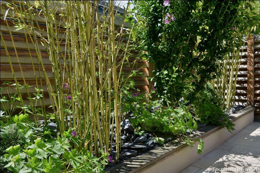 avant apr s am nager un jardin tout en longueur bambou patios et zen. Black Bedroom Furniture Sets. Home Design Ideas