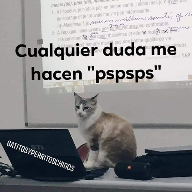 "CUALQUIER DUDA ME HACEN ""PSPSPS"" Memes divertidos, Memes"