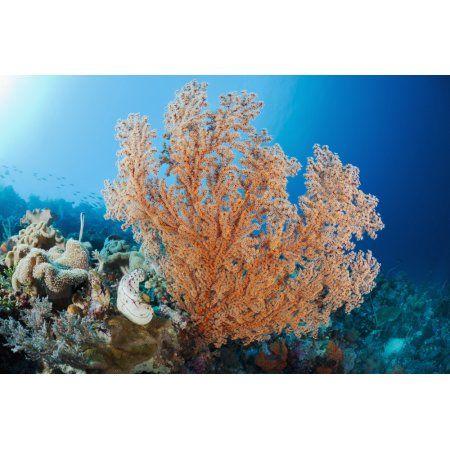 Indonesia A gorgonian coral tree dominates this underwater scene Canvas Art - Dave Fleetham Design Pics (19 x 12)