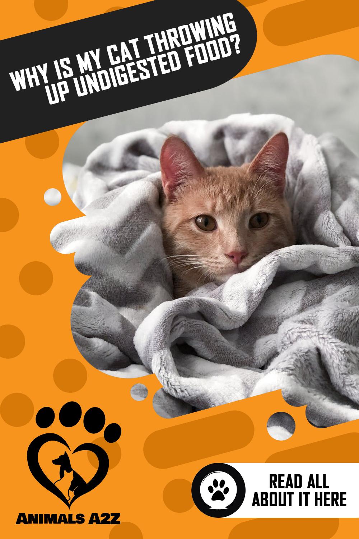 Pin on Cats Kitten & cat facts