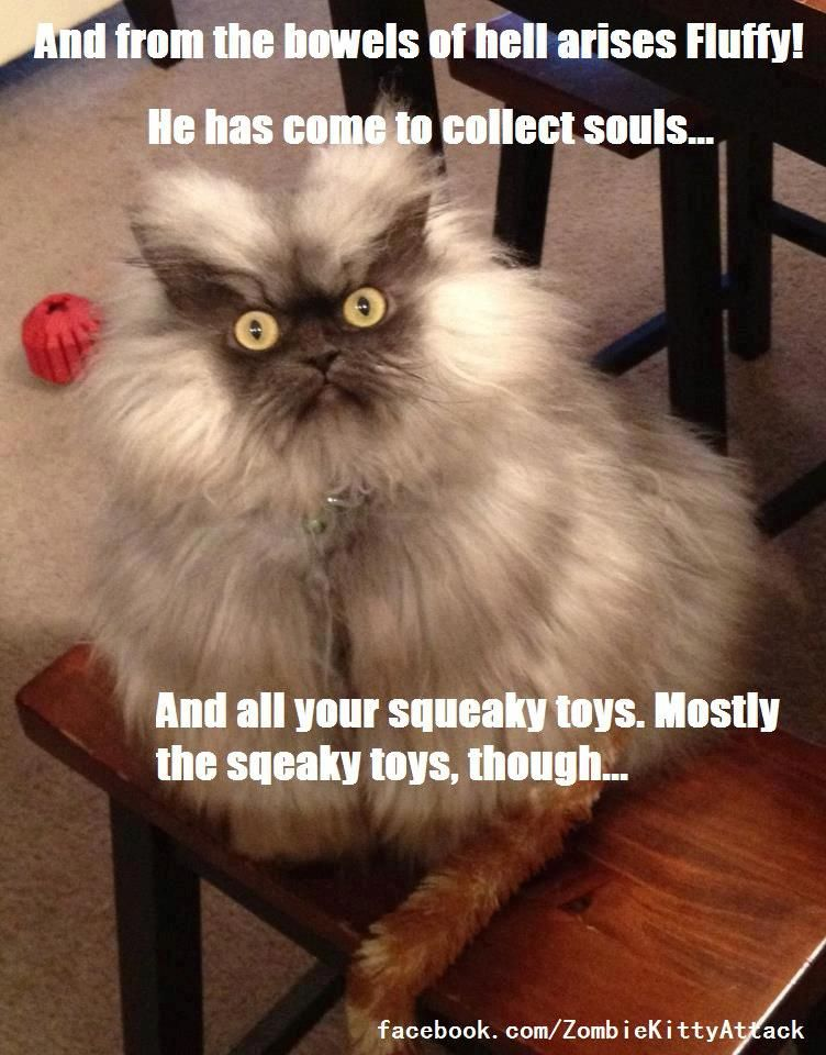 Yikes! Take all my squeaky toys! #cat #funny #cats #humor ...