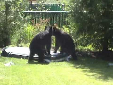 Bears like hot tubs - YouTube