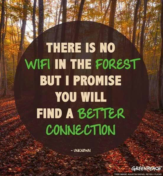 Forest Quotes: There Is No WiFi In The Forest.