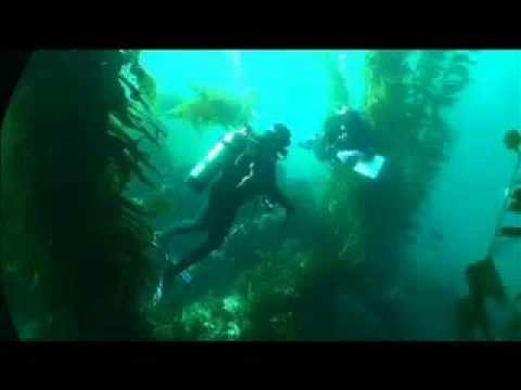 STEM ~ Marine Biology Marine Biology Pinterest Marines and - marine biologist job description