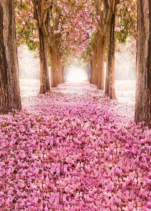 Pink Flowers Photo Backdrop Romantic Cherry Tree Photography Background Girl Wallpaper Photoshoot Prop Ca Cherry Blossom Wallpaper Spring Wallpaper Pink Trees