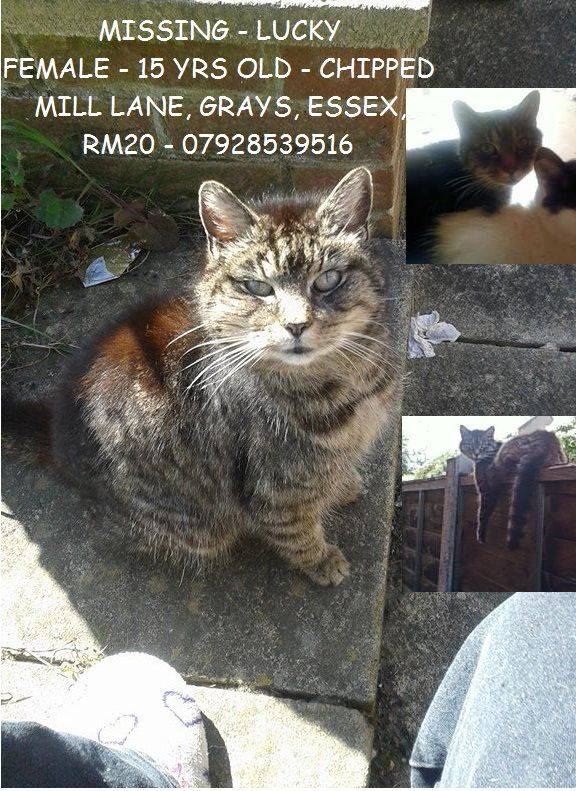 UK Please share missing cat 10/11/15 from Mill Lane