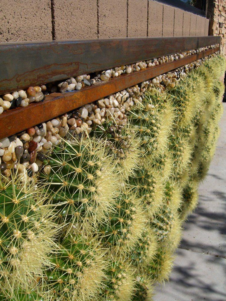 A Closer Look At The Barrel Cactus Wall Vertical