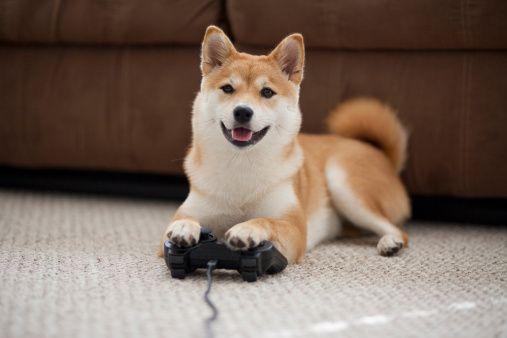 Dog Playing Video Games With Controller Shiba Inu Dogs Shiba