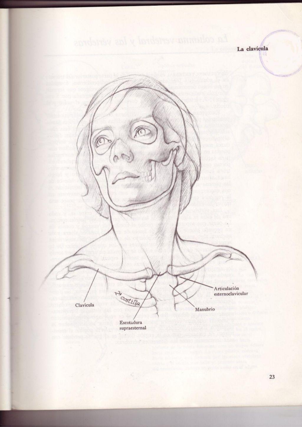 Anatomia-artistica-dibujo-anatomico-de-la-figura-humana | Figura ...