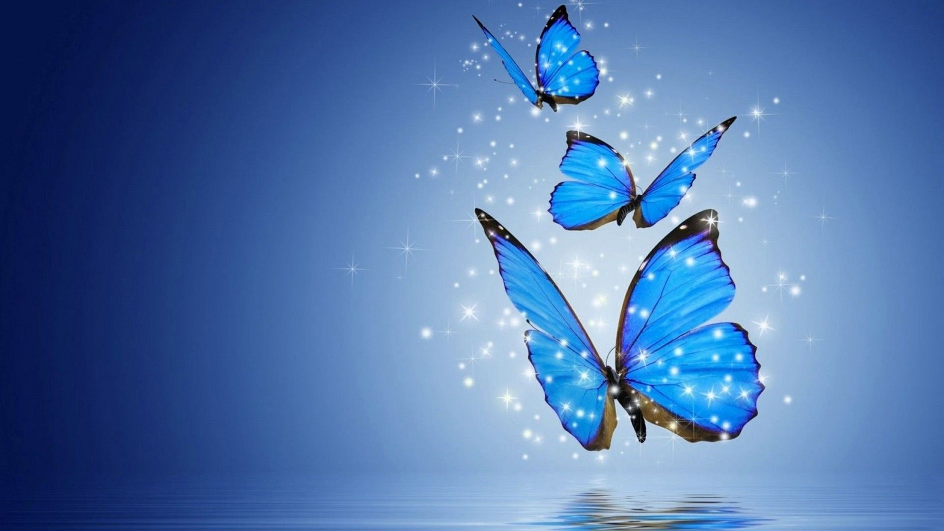 Computer Wallpapers Blue Butterfly Butterfly Wallpaper Blue Butterfly Wallpaper Beautiful Butterfly Images