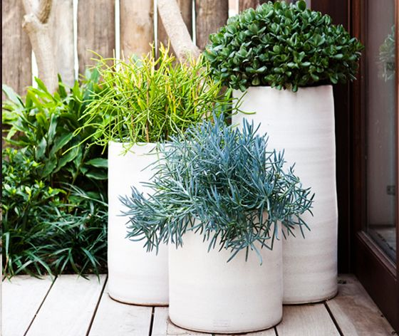 Pots And Decking With Images Plants Outdoor Gardens Patio Garden