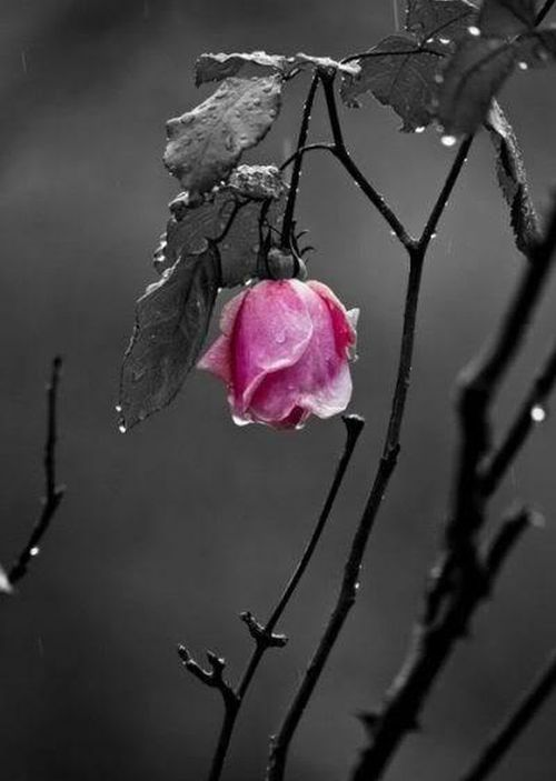 My Lost Years - A Rose Broken by a Man | An†h0|0gy ...