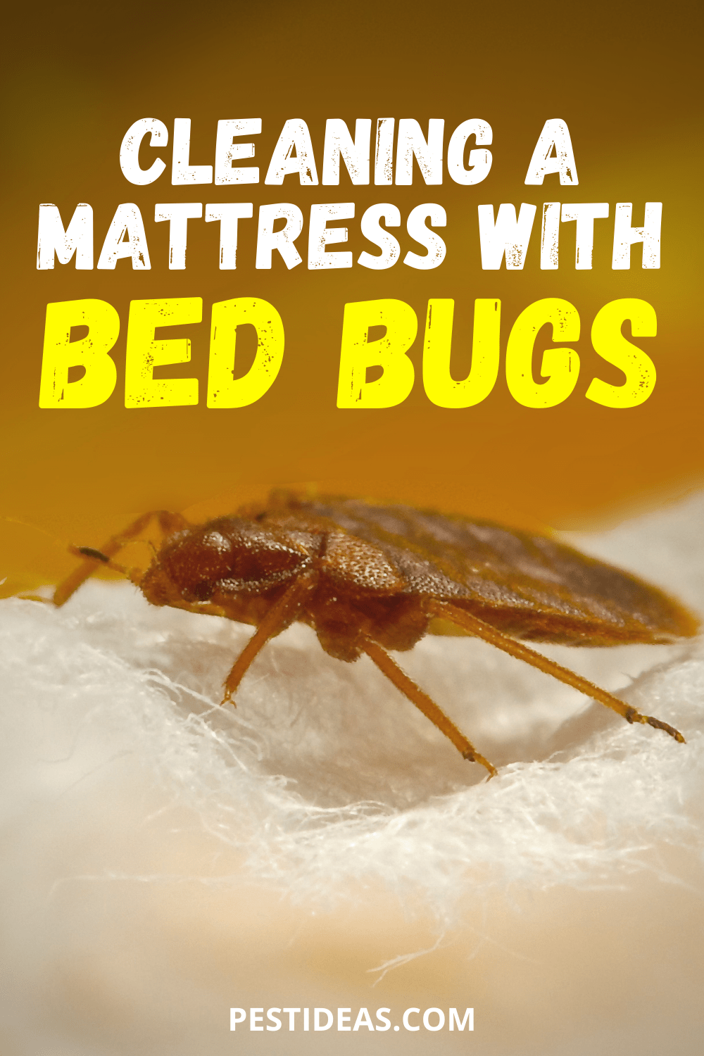 Cleaning a Mattress With Bed Bugs in 2020 Bed bugs, Rid