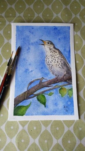 Song Thrush Watercolour Painting By Aisling Kiernan Art
