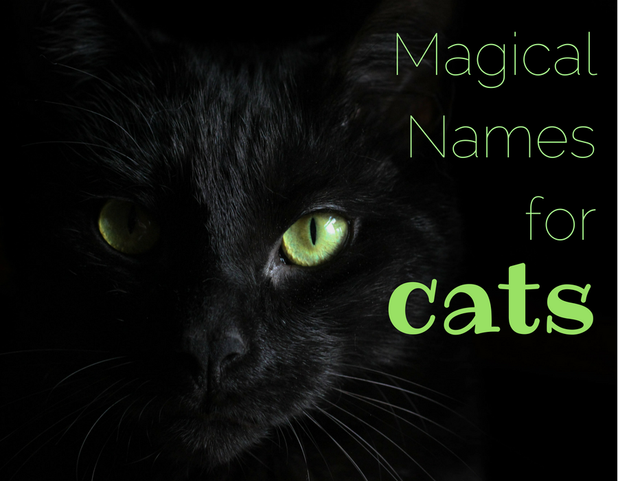 155 Magical Names for Cats Names for black cats, Unique