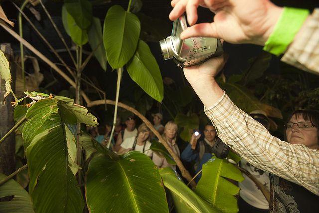 Frog Habitat  at Veragua Rainforest Research & Adventure.  http://veraguarainforest.com/