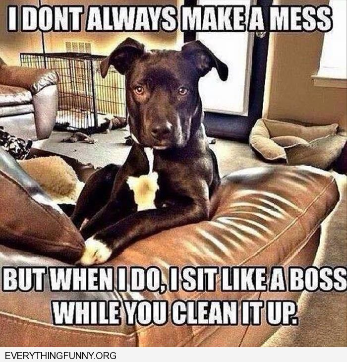 funny meme the most interesting man in the world dog i don 39 t always make a mess but when i do i. Black Bedroom Furniture Sets. Home Design Ideas