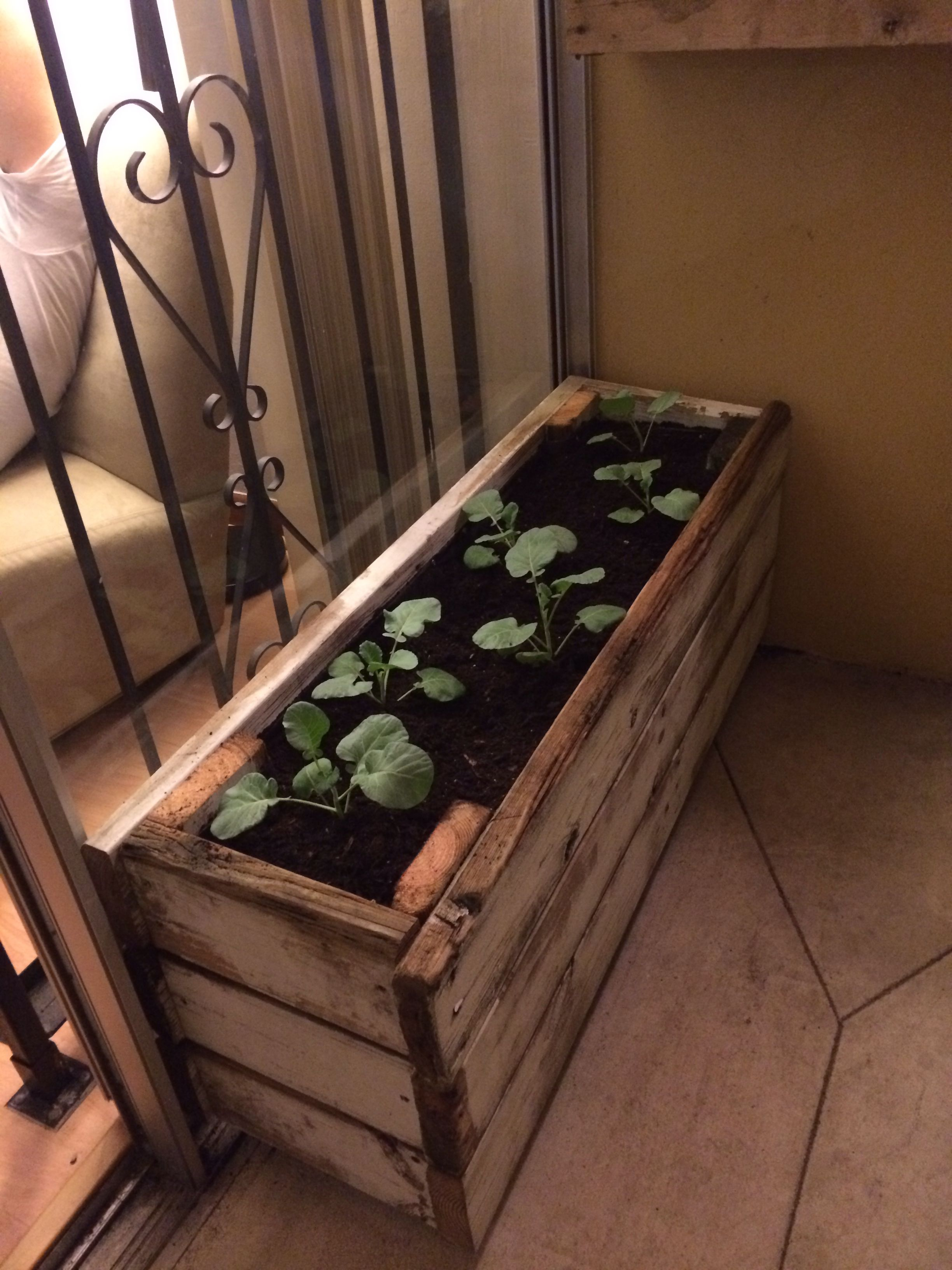 Be still like vegetables lay like broccoli storage