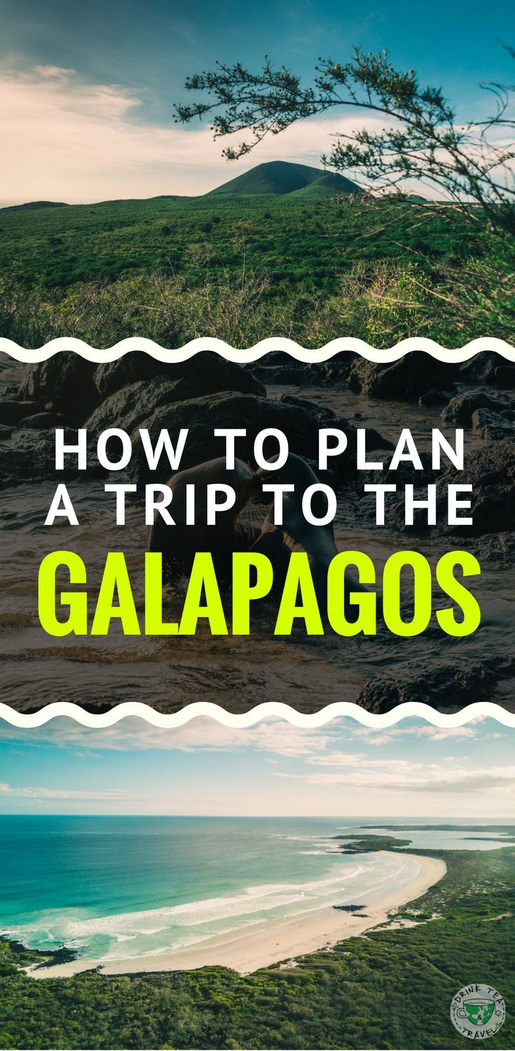 Interested in traveling to the Galapagos? Check out our ...