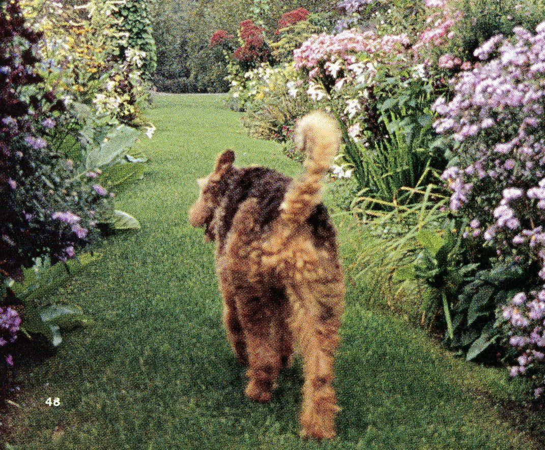 Pin By Janet Lohman On Dogs With Images Dogs