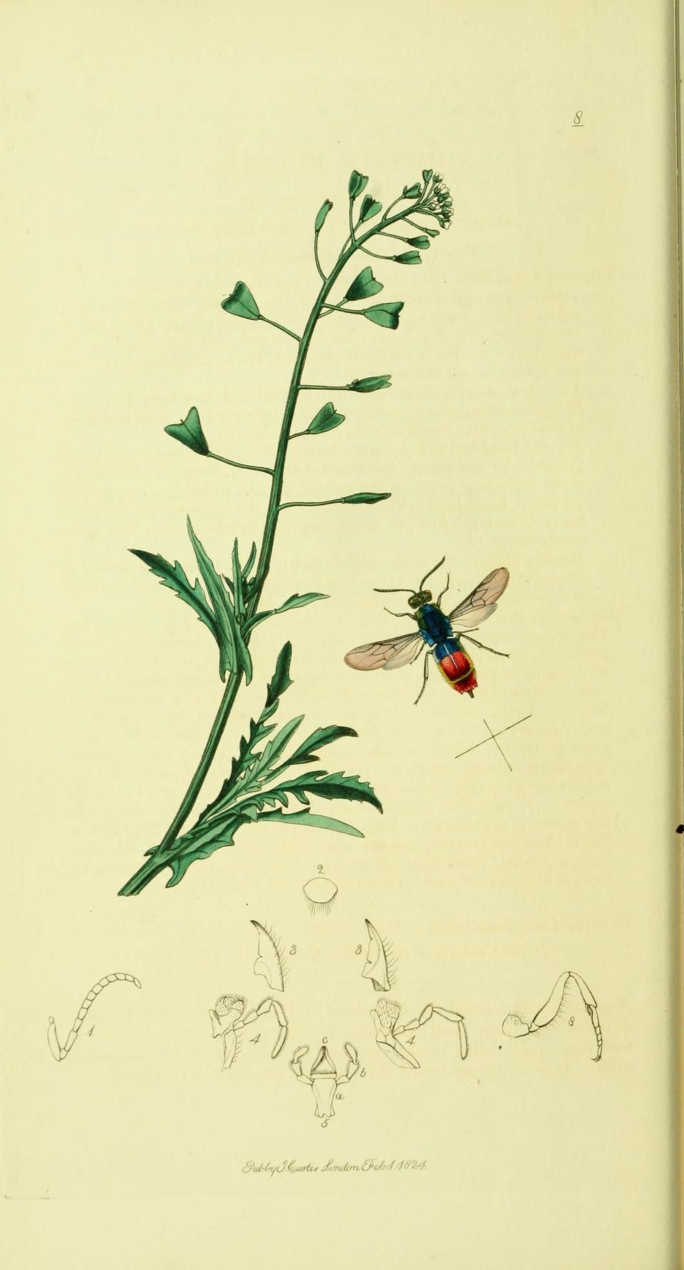 .v. 4 - British entomology, By John Curtis. Publication info: London : 1823-40 - via Biodiversity Heritage Library