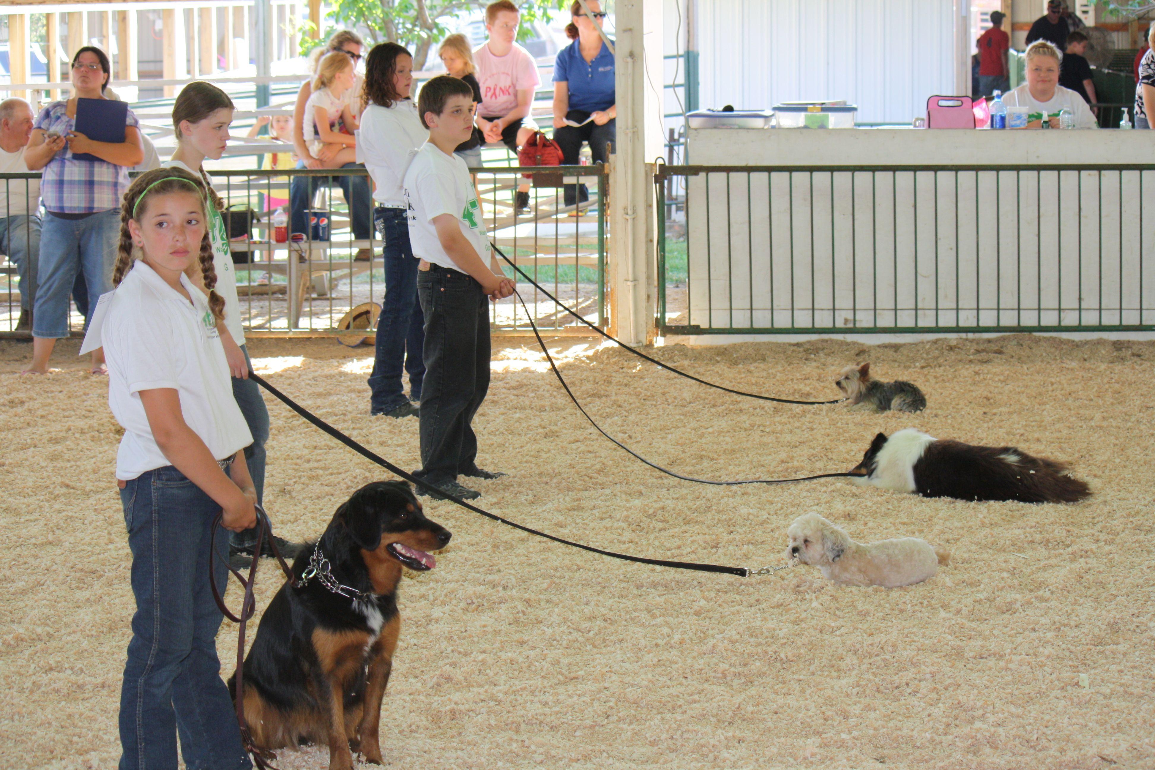 Day 195 4 H Dog Obedience Show Dogs Aggressive Dog Dog Behavior