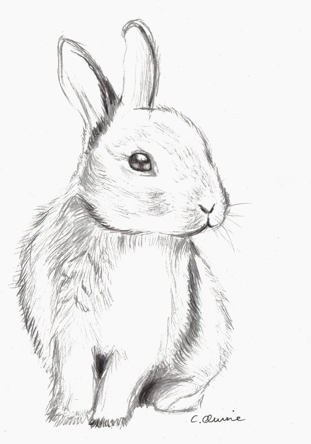 realistic baby bunny coloring pages - photo#36