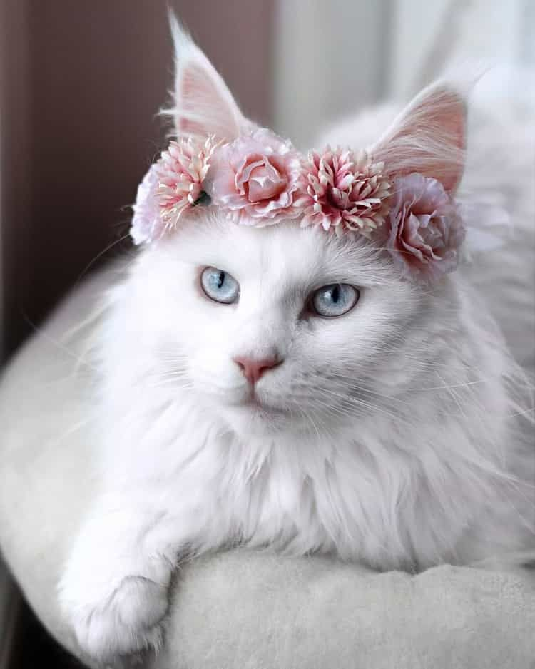 Pink Cute Baby White Cats Wallpaper