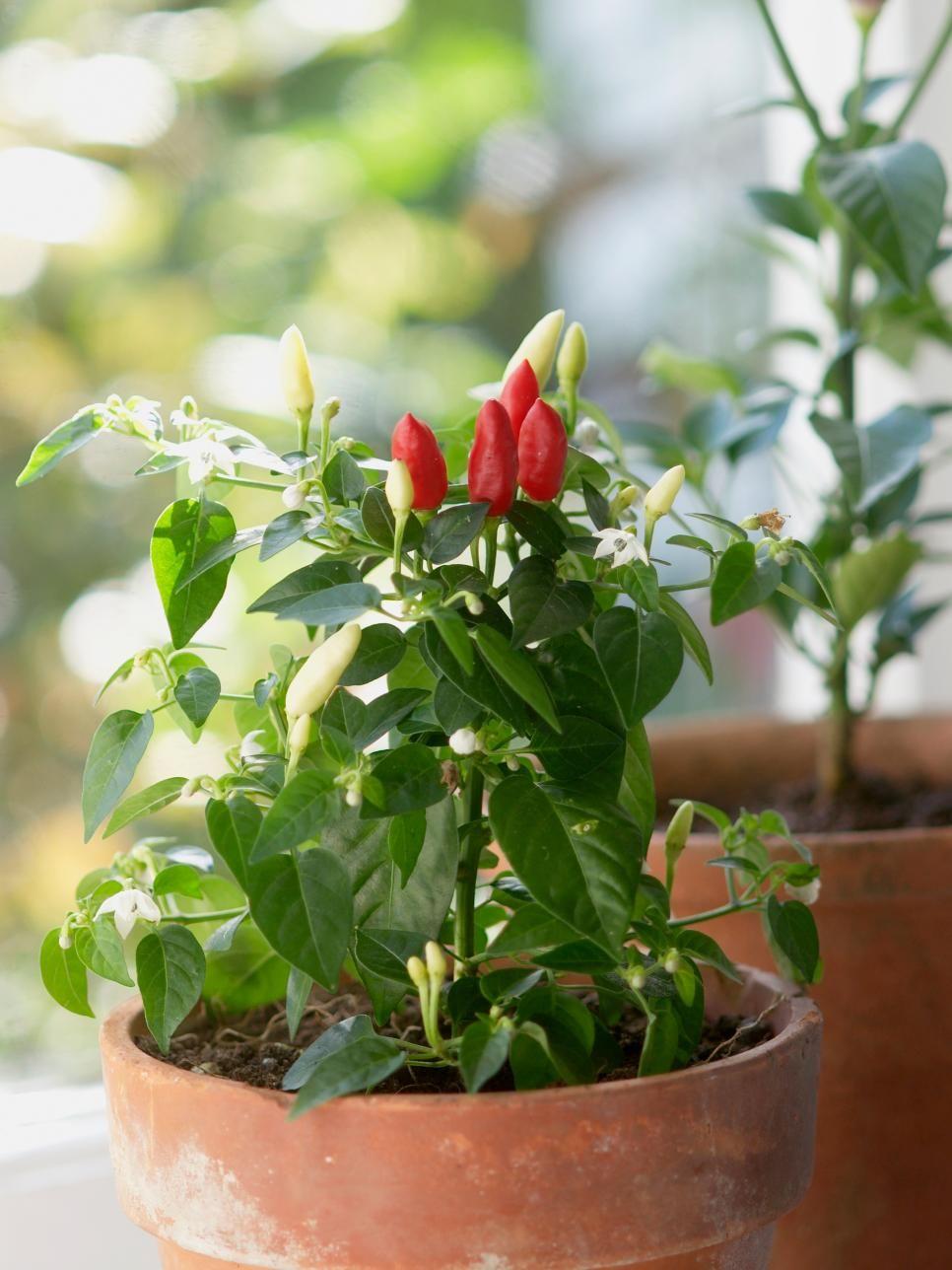 30 Small Garden Ideas U0026 Designs For Small Spaces
