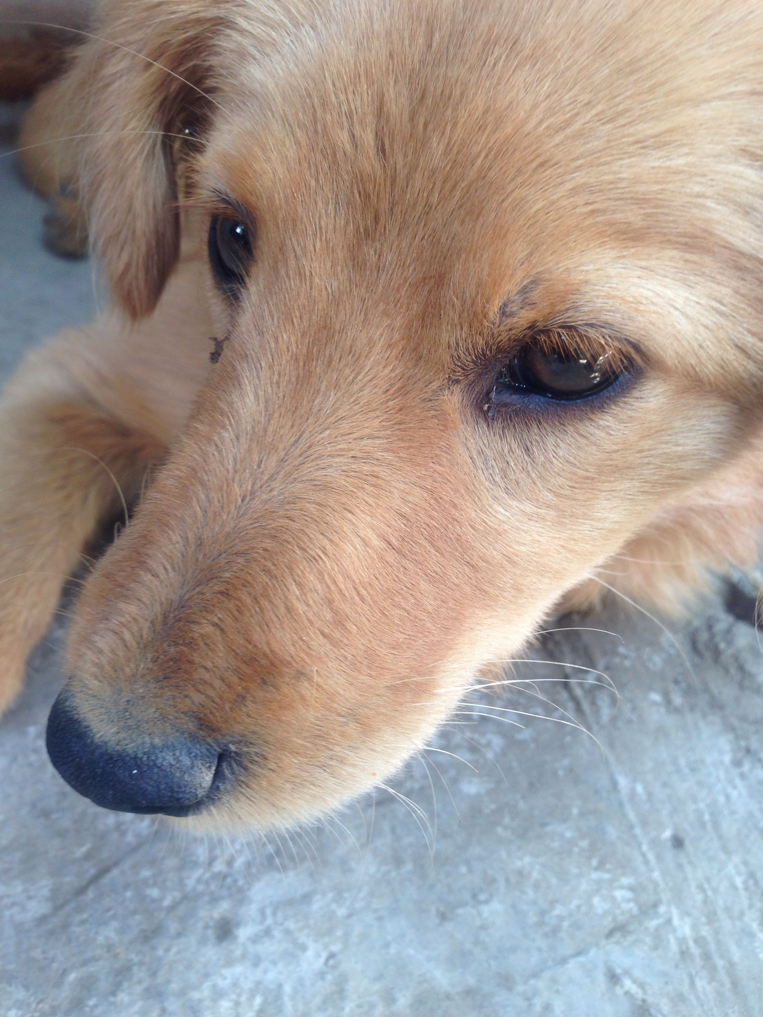 Cachorro Triqui.