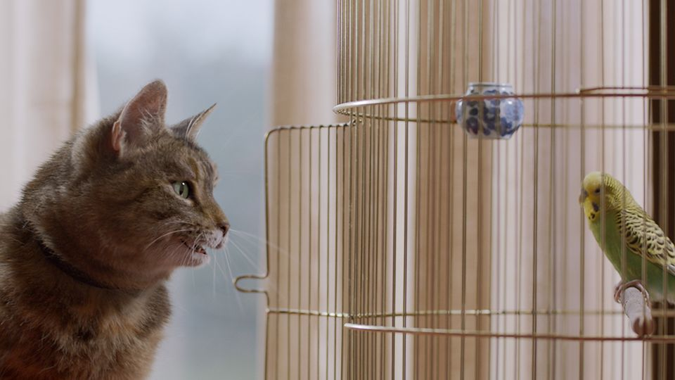 I Tawt I Taw A Puddy Cat Freeview Partners With Channel 4 To