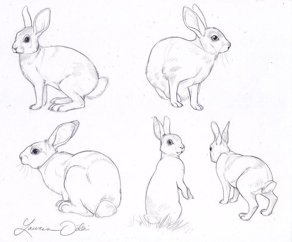wild rabbit study by daffodille u2026 pinteres u2026