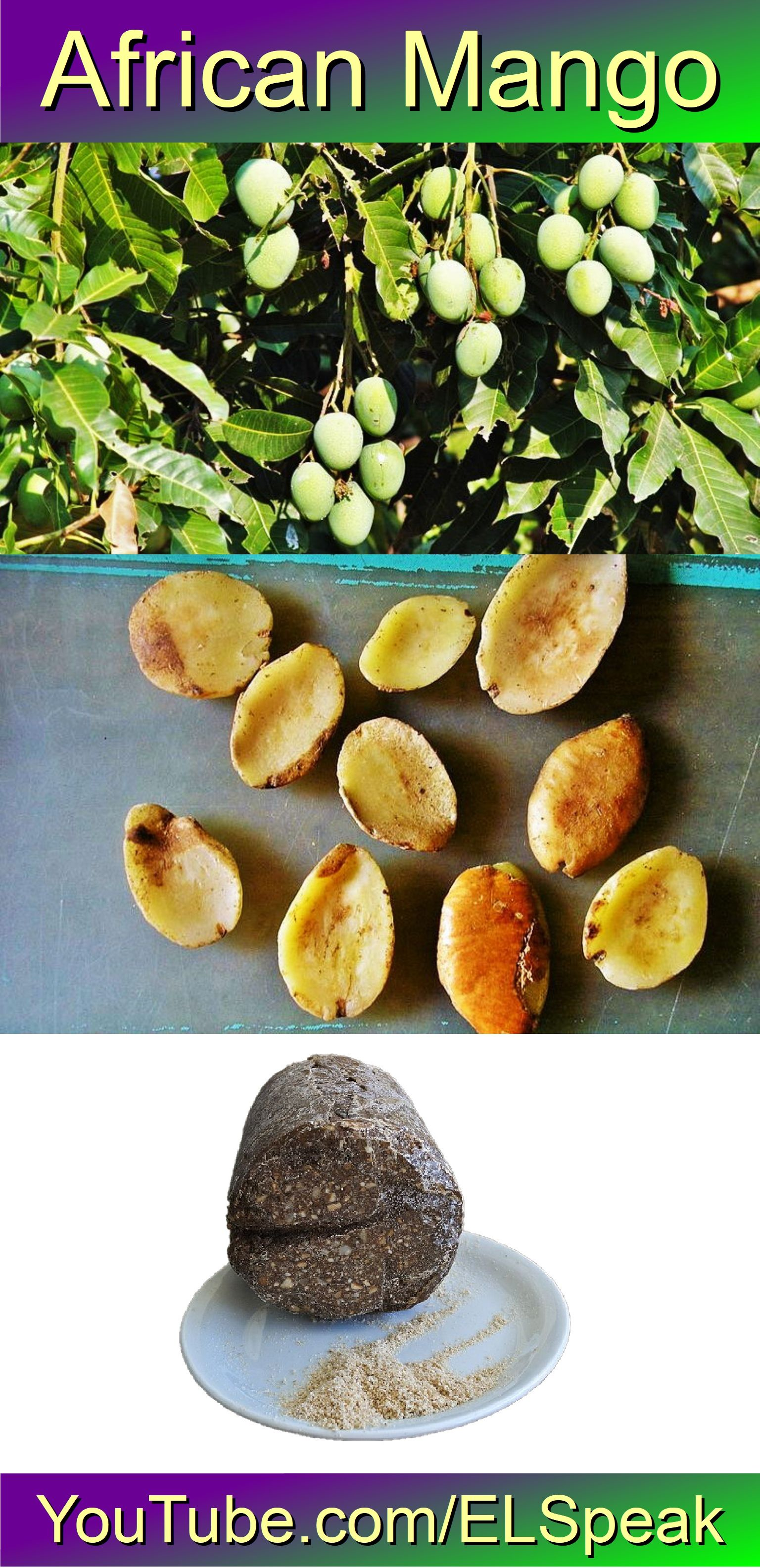 African Mangoes Irvingia Gabonensis And Irvingia Wombolu Are African Tree Species Of The Genus Irvingia Bearing Edible Fruits Similar To Mango That Are Par