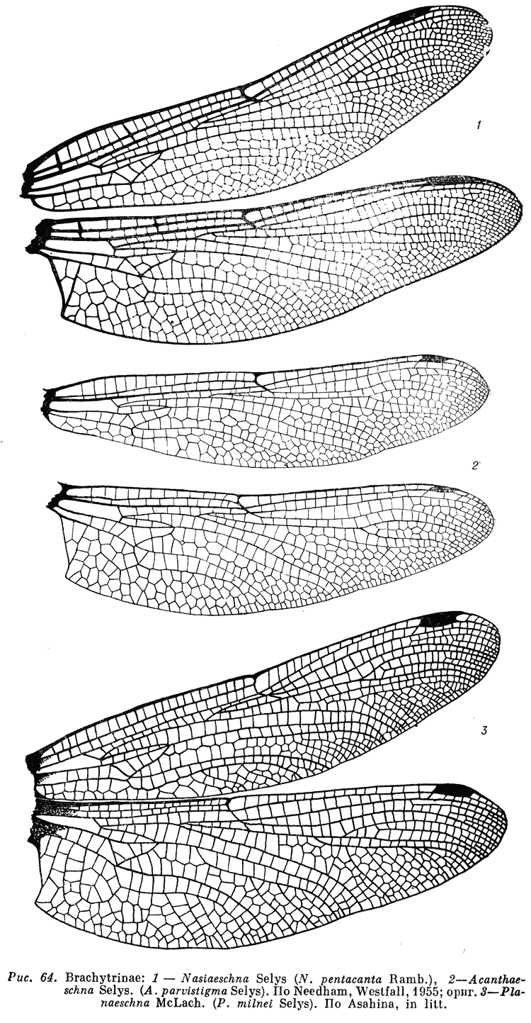 Detail Of Dragonfly Wings 750 1443 Dragonfly Drawing Dragonfly Art Insect Art